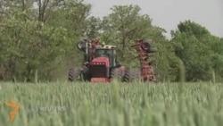 Ростов фермерлари қурғоқчиликдан хавфсирамоқда