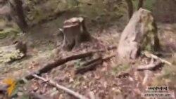 Ապօրինի ծառահահատումը «շարունակում է մնալ Հայաստանի անտառների թիվ մեկ խնդիրը»