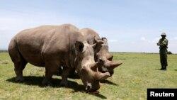 Носорози и поезия. Новини като хората