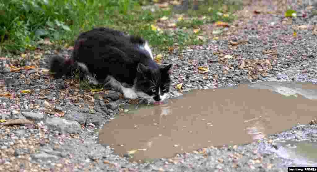 КРИМ – кіт на вулиці сімферопольського мікрорайону Мар'їно– Сімферополь, Україна, 20 вересня 2021