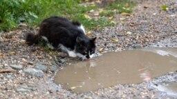 КРЫМ - - кот на улице симферопольского микрорайона Марьино - Симферополь, Украина,20Сентября2021