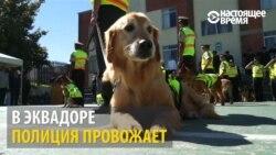 В Эквадоре собак-полицейских проводили на пенсию (видео)