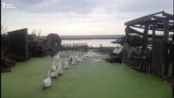 Как село Чистое стало зелёным