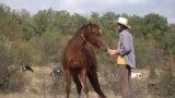 Odiseea cailor