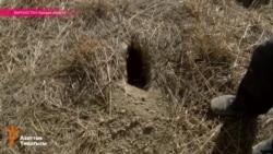 День шакала в Кыргызстане: животные взяли в осаду жителей Ошской области