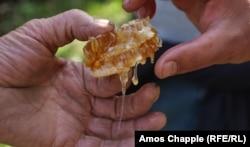 ფიჭა თაფლით ხელში