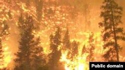 Верховой пожар в Национальном парке в Монтане. Лоси спасаются в реке