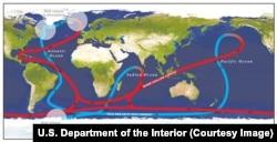Схематичное изображение глобального океанического конвейера