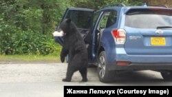 Медведь ворует бутерброд