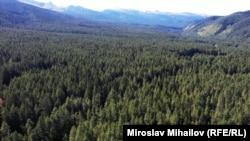 3500 дка гори в района на Говедарци и Мальовица са заменени срещу терени в община Своге