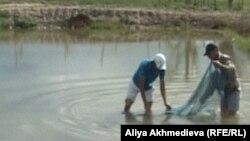 Работники хозяйства в пруду, где разводят мальков. Алматинская область, Алакольский район,13 июля 2012 года.