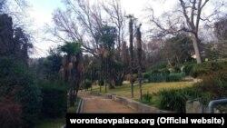 Погибшие китайские веерные пальмы, Алупкинский парк