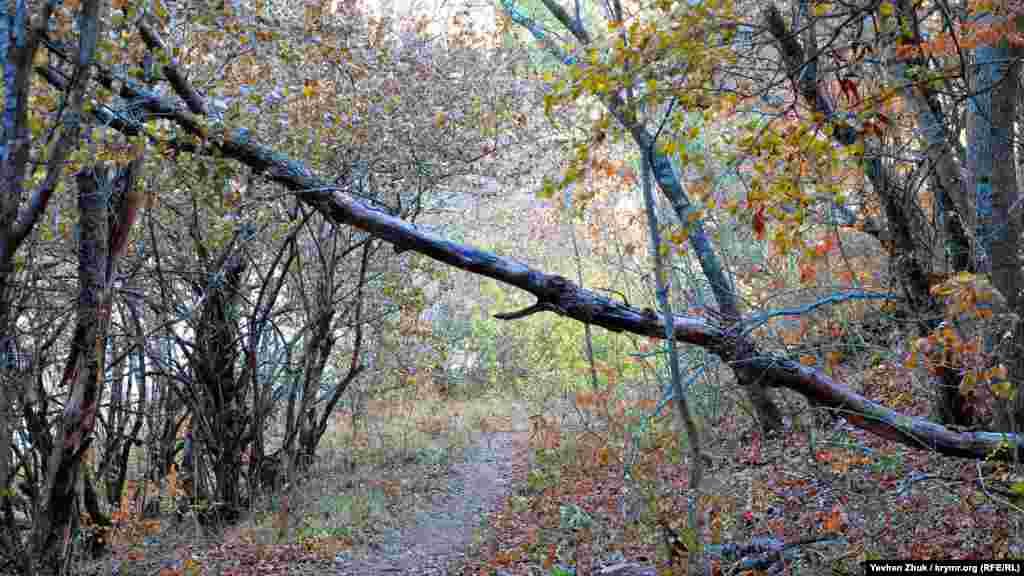 Дерево, що впало, перегородило лісову стежку