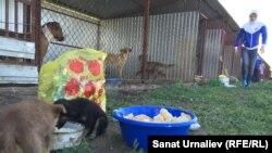 """Волонтеры общества по защите животных """"За жизнь!"""" во время кормления собак в государственном питомнике. Село Круглоозерное Западно-Казахстанской области, 21 мая 2015 года."""