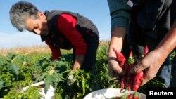 Žene slabo informisane o agrarnoj politici