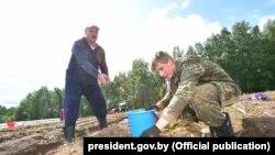 Аляксандар і Мікалай Лукашэнкі зьбіраюць бульбу на «прэзыдэнцкім полі»