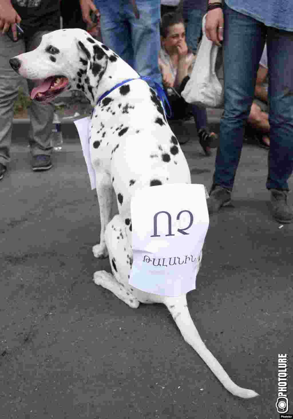 Надпись на спине у собаки гласит: «НЕТ грабежу!»