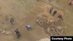 Ослиный могильник у водоема в Самарканде.