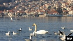 Илустрација, Охридско езеро