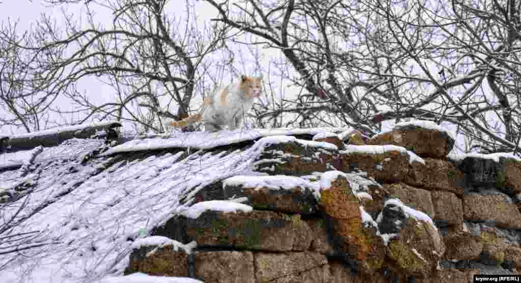 Дворовий кіт на даху старої споруди в Сімферополі після снігопаду 23 березня. Крим.Реалії прогулялися засніженими вулицями Сімферополя