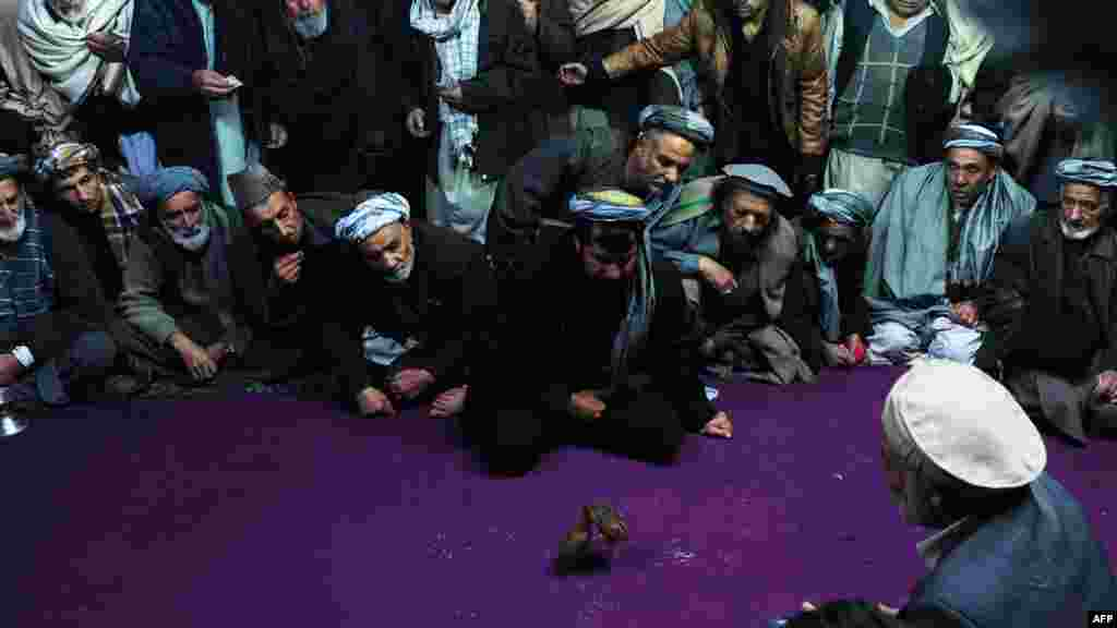 Afghan spectators watch a quail fight in Mazar-e Sharif. A popular sport in Afghanistan, two birds are placed inside a circle and made to fight each other until one of the birds flees. (AFP/Qais Usyan)