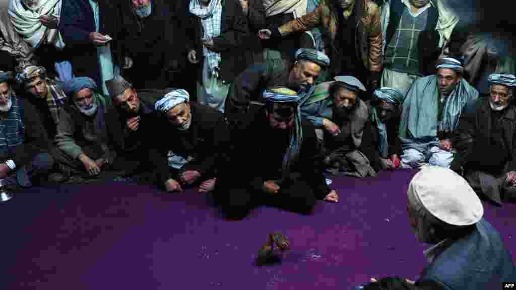 """Lupte de prepeliţe în Mazar-e Sharif - un """"sport"""" popular în Afghanistan (AFP/Qais Usyan)"""