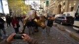 С Бродвея в Нью-Йорке хотят убрать скульптуру «Атакующего быка»