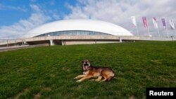 A stray dog lies on the grass in front of the Bolshoy Ice Dome at the Olympic Park in the Adler district of Sochi (5 Feb 2014)