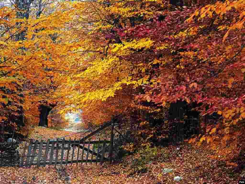 پادشاه فصلها پاییز - مازندران