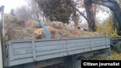 Чинары, вырубленные 23 ноября в Пахтаабадском районе Андижанской области.