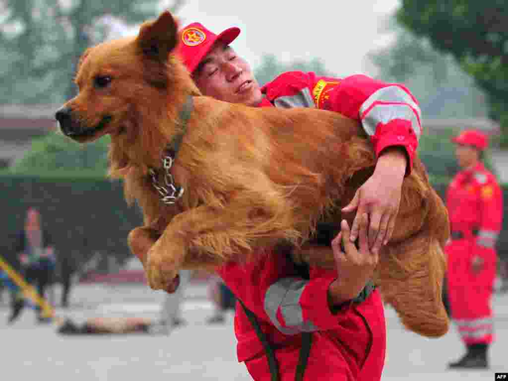 A search-and-rescue dog leaps through the arms of his trainer from the Engineering Regiment of the People's Liberation Army (PLA) during a demonstration on July 30 on the outskirts of Beijing. Photo by Frederic J. Brown for AFP