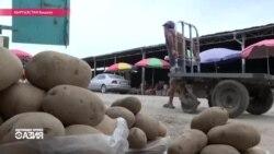 Почему в Кыргызстане резко подорожала картошка?