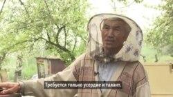 Миллион на меде. Сколько зарабатывают пчеловоды Кыргызстана?