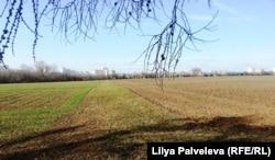 Опытные поля Тимирязевской академии