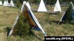 В сильную жару саженцы ели в Ташкенте нуждаются в особой заботе, июль, 2015 год