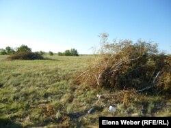 Кесілген ағаштардың жапырағы қураған бұтақтары. Қарағанды облысы Осакаров ауданы. 13 маусым 2013 жыл.