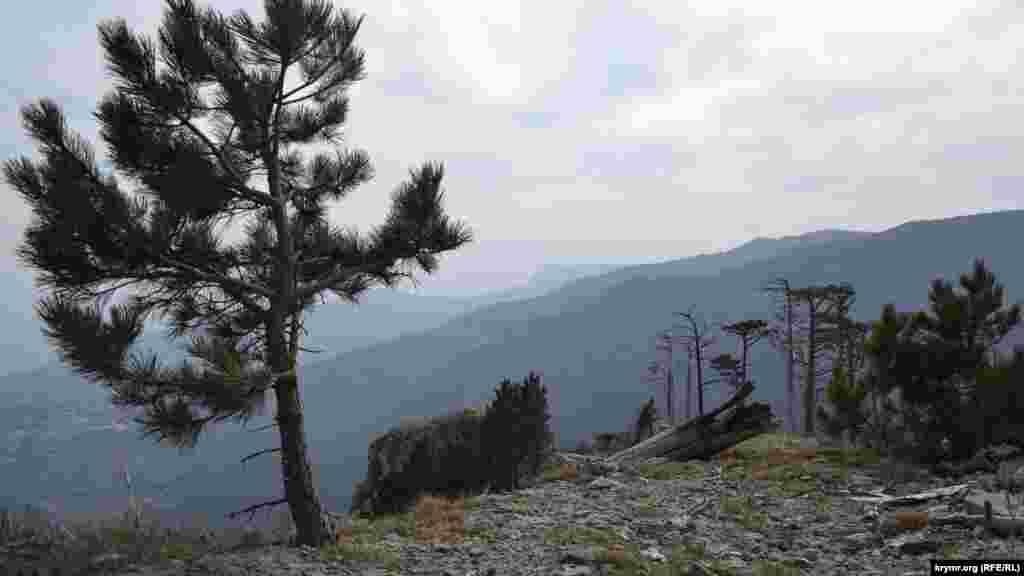 Краєвид на гори Кизил-Кая, Іограф і зубці Ай-Петрі зі скельної сідловини в ялтинському заповіднику. Російська влада Криму каже, що посилено патрулює ліси, щоб уникнути підпалів. Втім, 5-6 квітня в Ялтинському гірничо-лісовому заповіднику вигоріло близько 2,5 гектарів. Наслідки старих пожеж в лісах Ялти– у фотогалереї