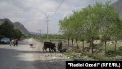 Таджикско-киргизская граница на территории анклава Ворух