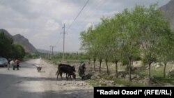Участок границы в анклаве Варух