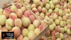 Сезон персиков в Кумсангире