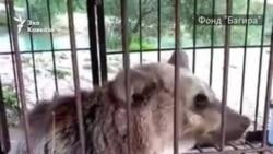 Медведь в клетке над водой