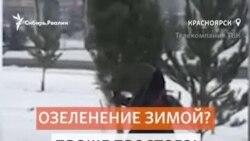 Срубленные деревья вкопали в снег к Универсиаде