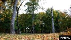 Проект постановления о лесосечном фонде и восстановительных работах в лесах Абхазии представил Анзор Ашхацава. В нем определен общий объем лесозаготовок на 2016 год, он составляет 38300 кубометров, из них 35600 – деловая древесина