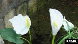 Цветы как товар хороши в начале марта