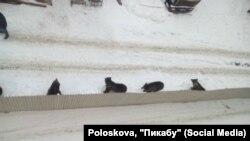 Медведи на улицах Иркутска