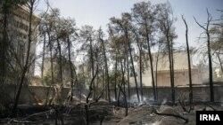 نمایی از درختان سوخته شده در حادثه آتشسوزی باغ تاریخی «فرزانه» در شیراز