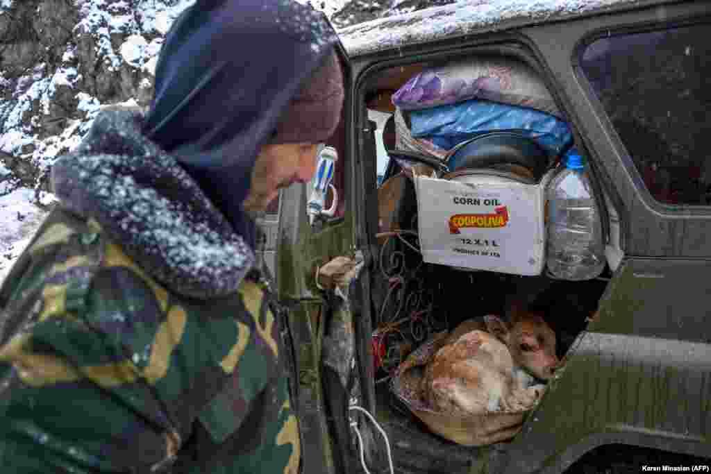 A man shows a newborn calf in his car on a road outside the town of Lachin after six weeks of fighting between Armenia and Azerbaijan over the breakaway Nagorno-Karabakh region. (AFP/Karen Minasian)