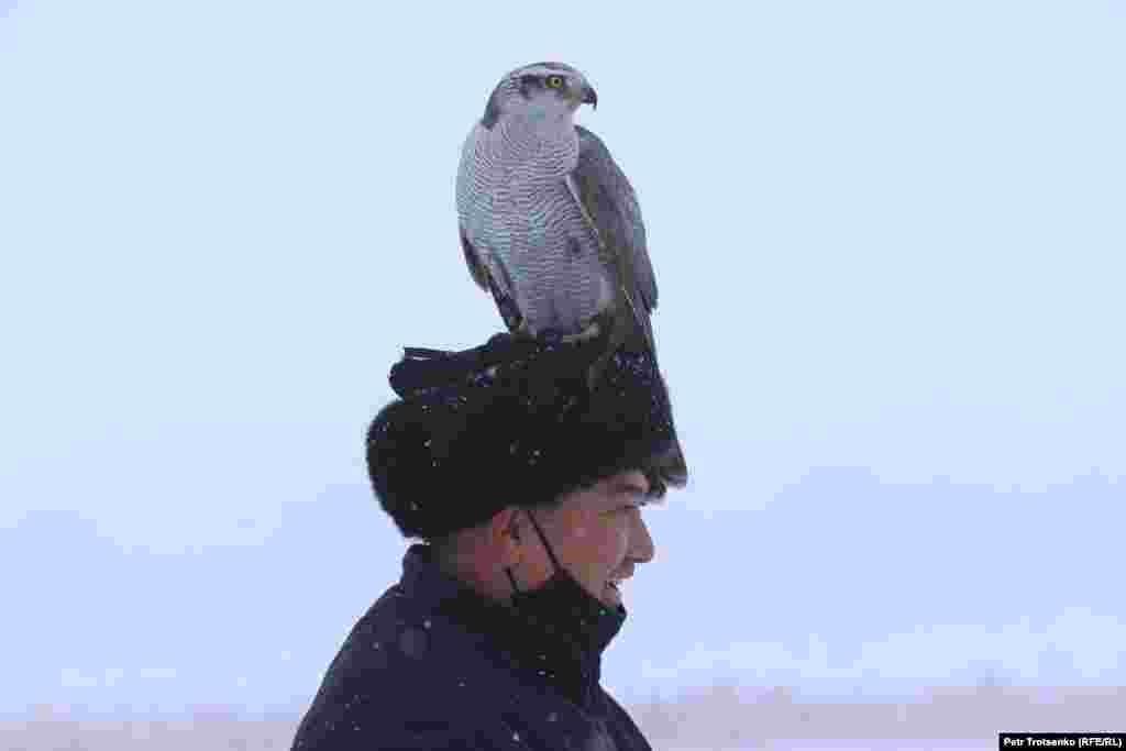 Граблива птица е кацнала на главата на стопанина си.