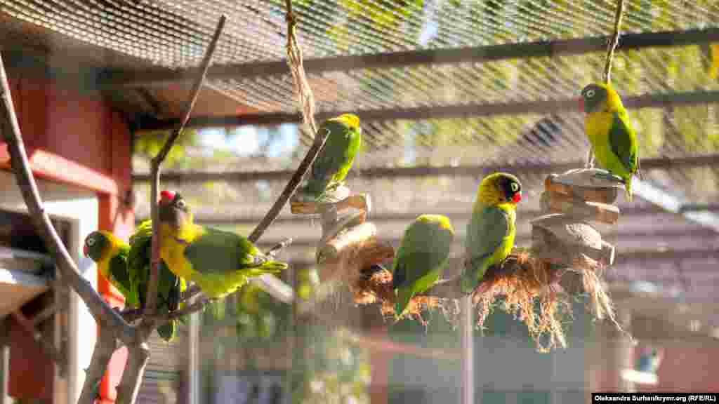 В Гагаринском парке Симферополя появился вольер с попугаями-неразлучниками. В загоне поддерживают необходимую для птиц температуру и запрещают кормить или отлавливать их