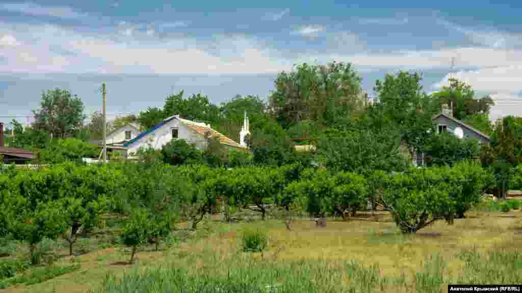 У присадибних садах жителів села переважають персикові дерева